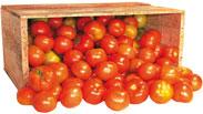 Tomate Salada - 20kg